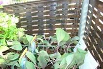 film étirable macroperforé machine aération palette fruit légume plante